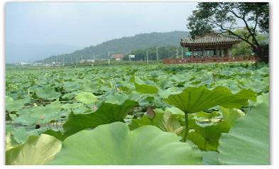 유호연지(柳湖蓮池)